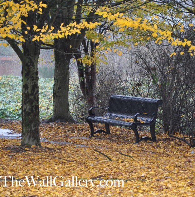 The Bench Picture 1