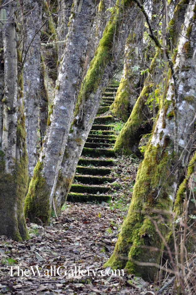 The Moss Covered Stairs
