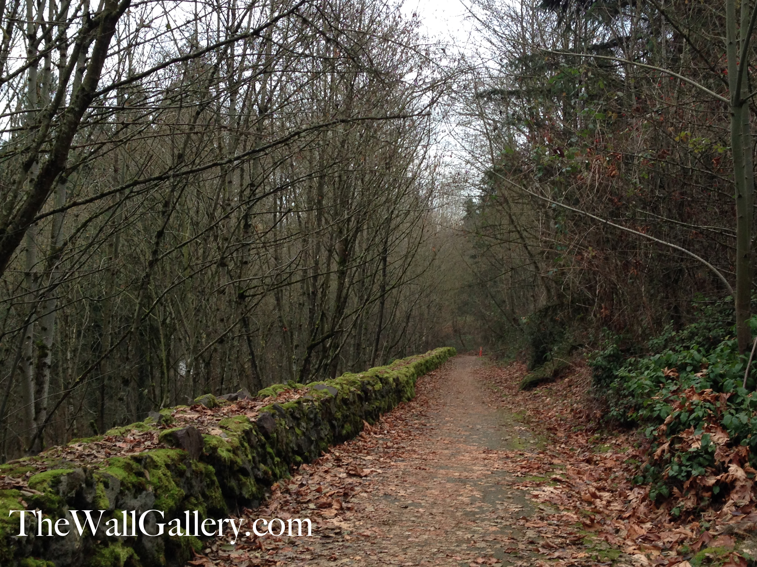 Moss Rock Wall Trail