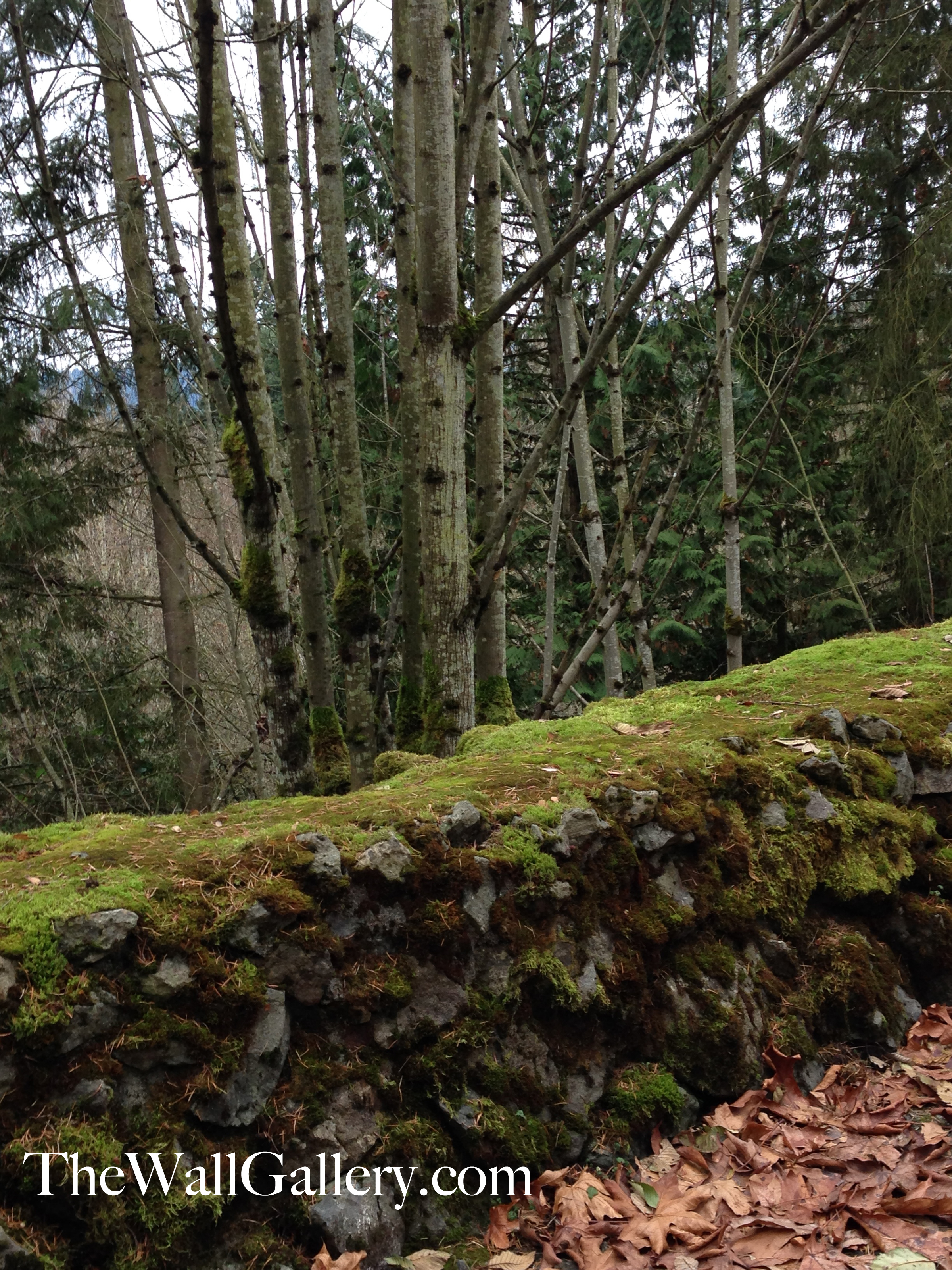 A Close Up of The Moss Rock Wall