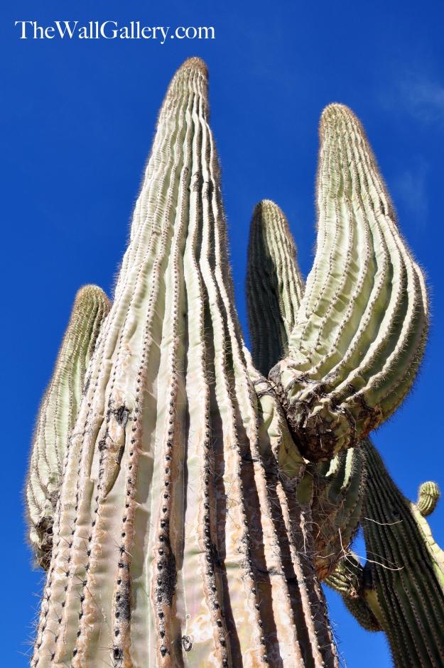 Saguaro Upshot
