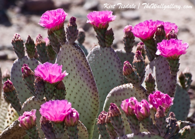 Cactus Bloom 3