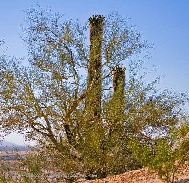 Desert Hike 1