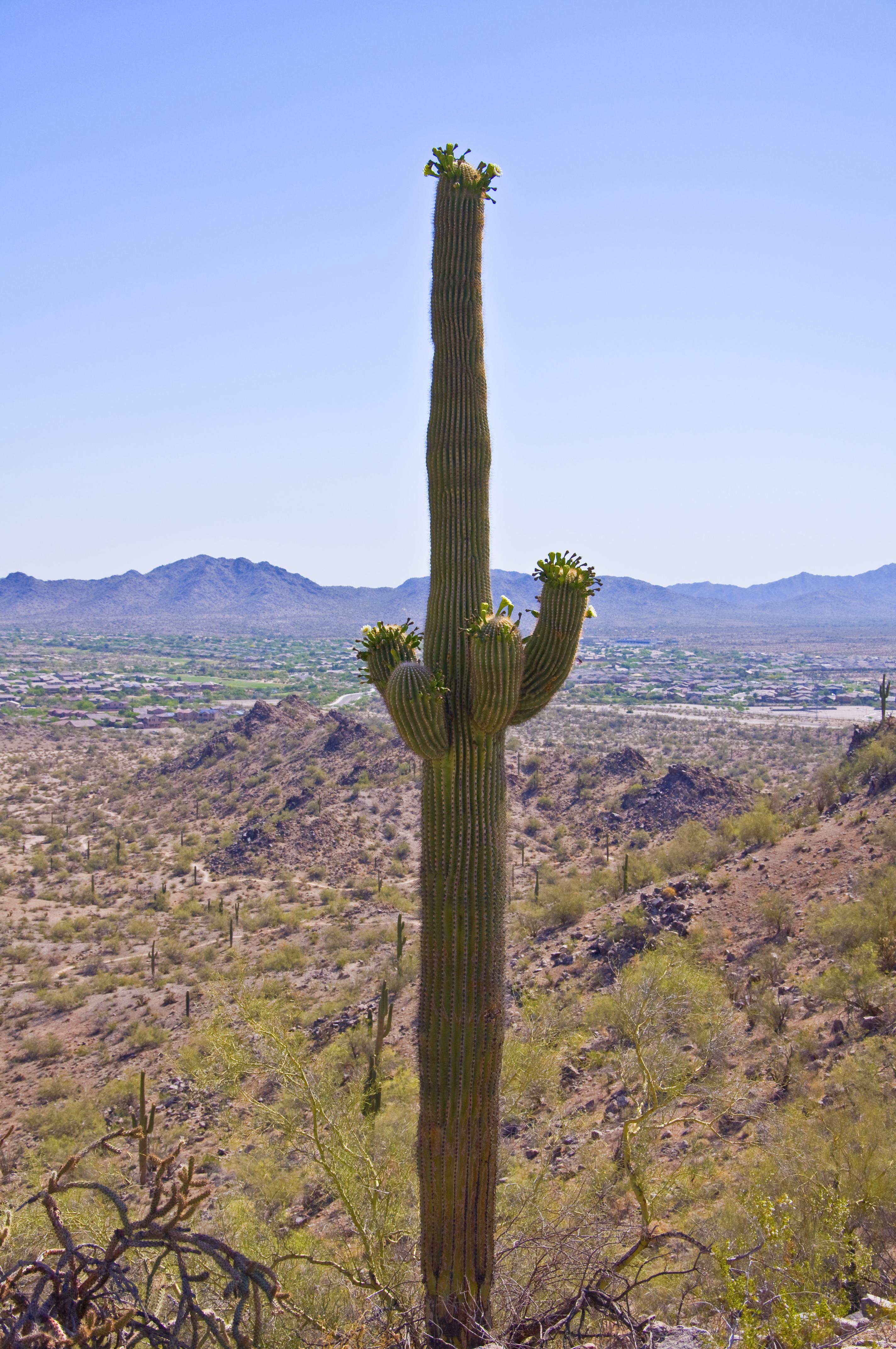 Desert Hike 3