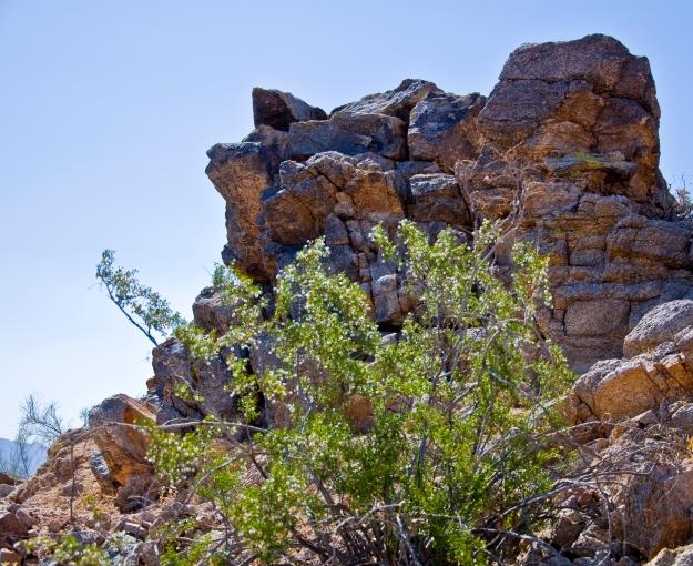 Desert Hike 4