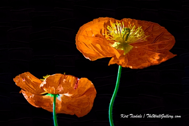 Painted Poppies One
