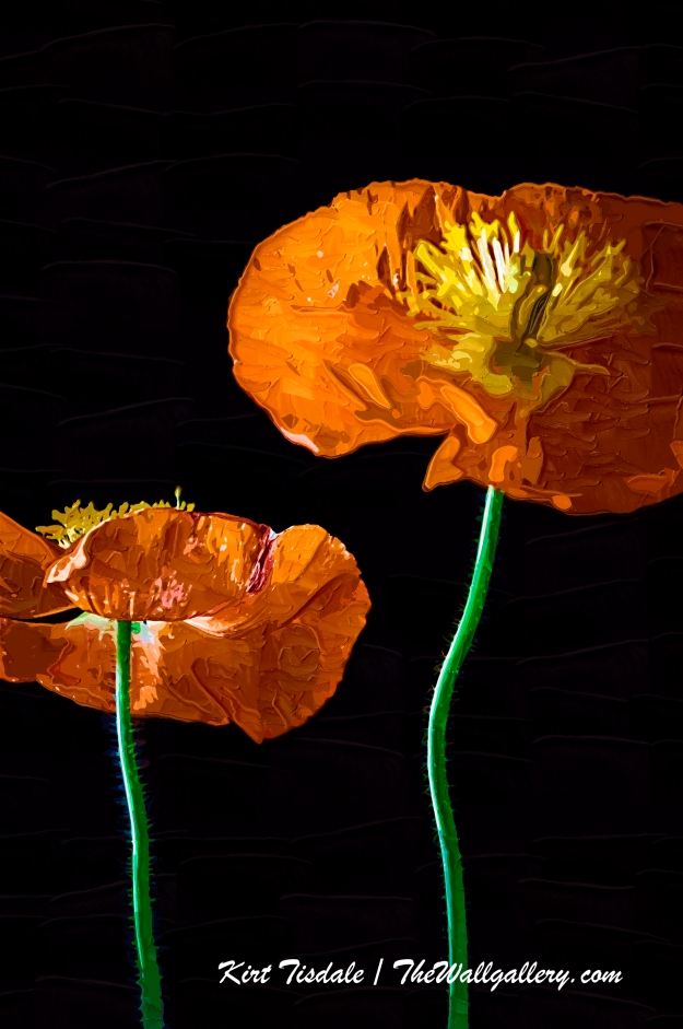 Painted Poppies Two
