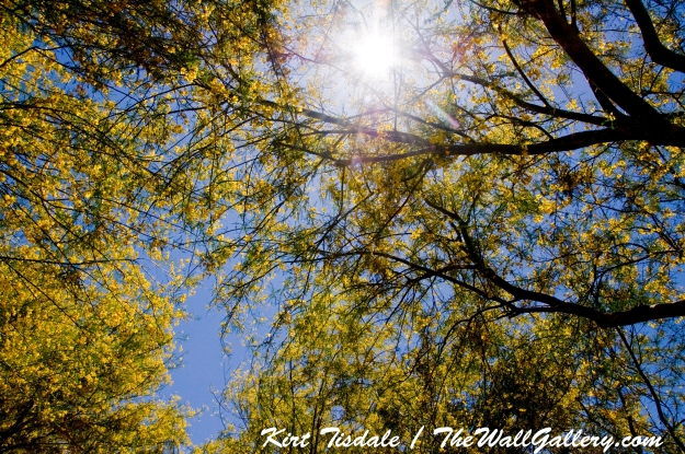 Sun in Trees One