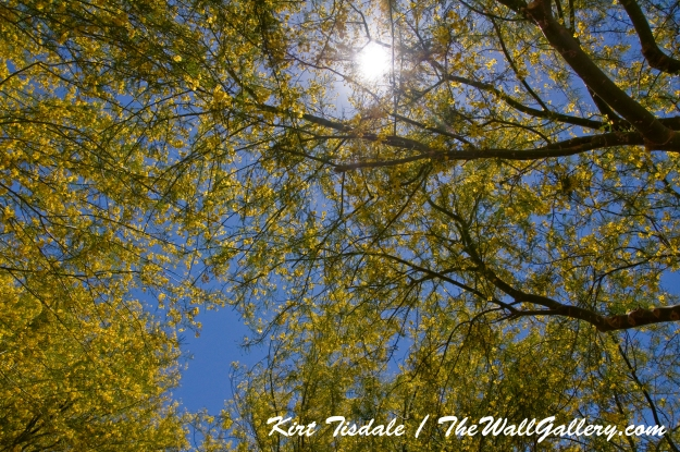 Sun in Trees Two