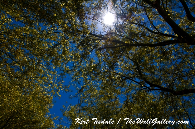 Sun in Trees Three