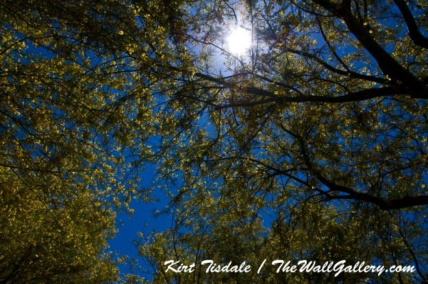 Sun in Trees Three