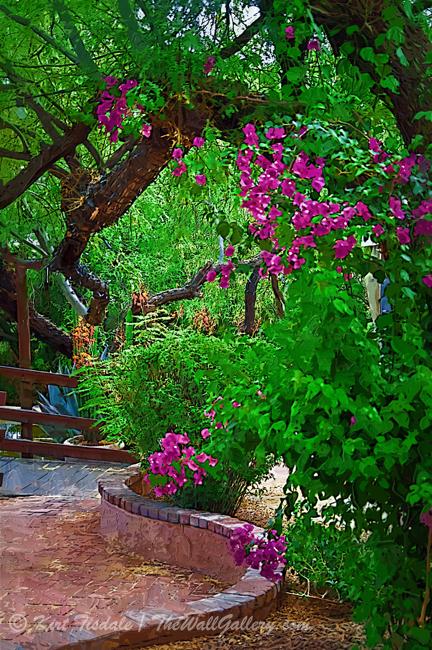 Bougainvillea in the Courtyard