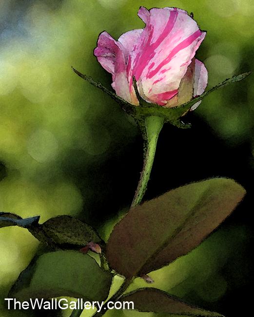 Candy Cane Rose Bud