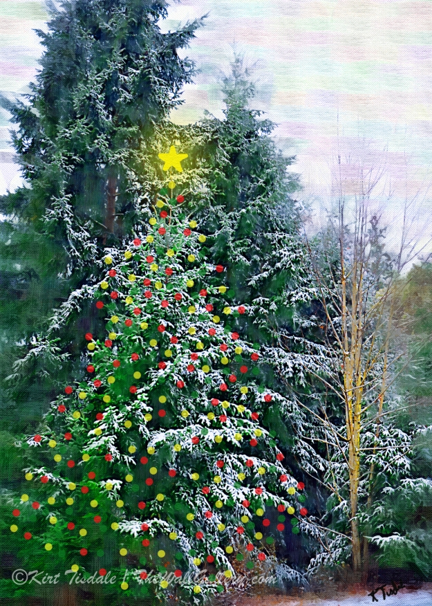 Christmas Tree in the Forest
