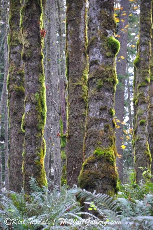 Sunlit Moss Trees