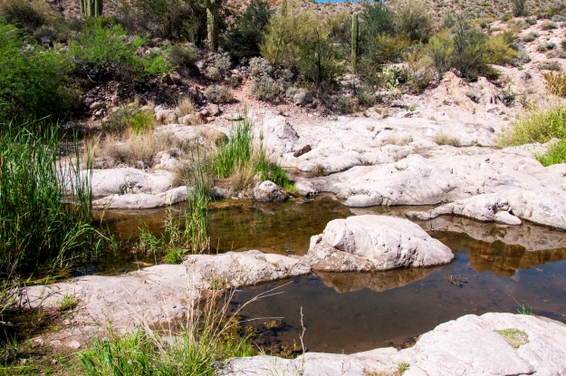 Desert Oasis 2