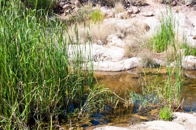 Desert Oasis 4