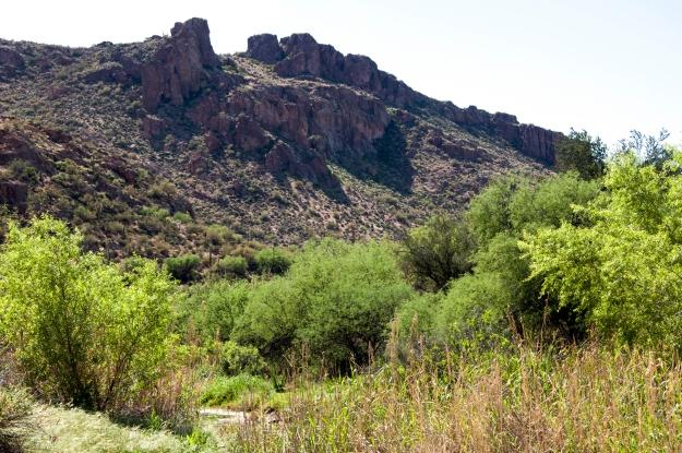 Desert Oasis 6