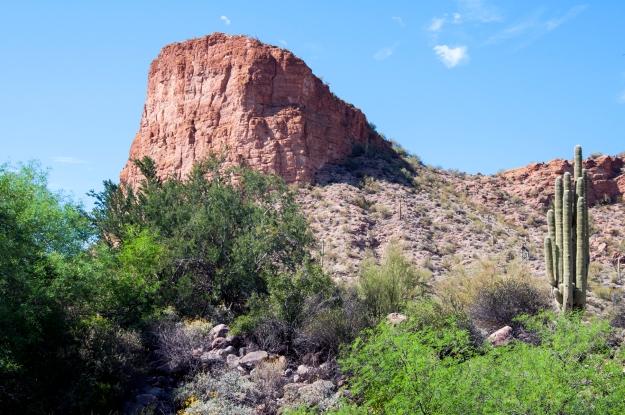 Desert Oasis 7