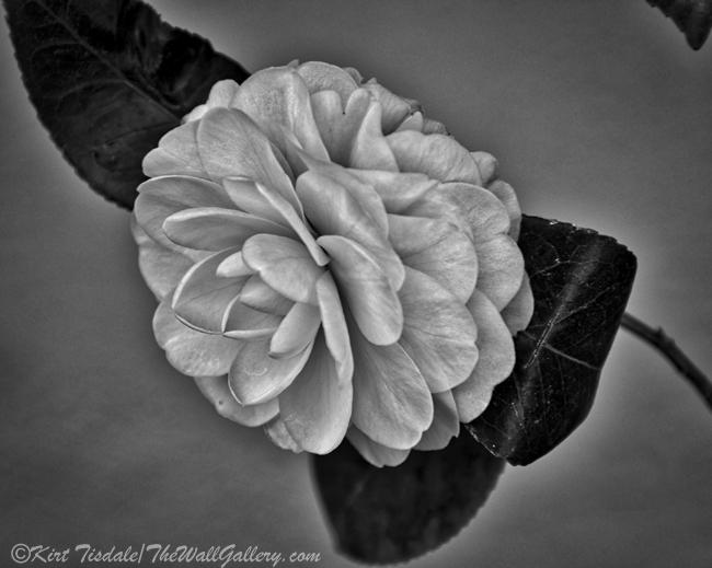 B&W Floral Bloom 1