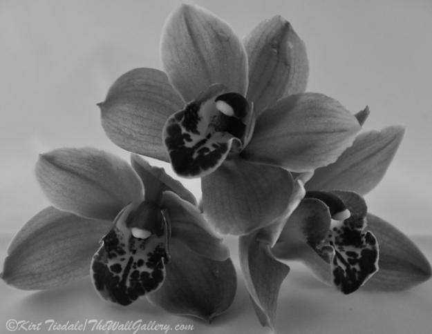 B&W Floral Bloom 2