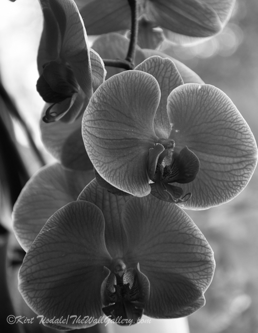 B&W Floral Bloom 3