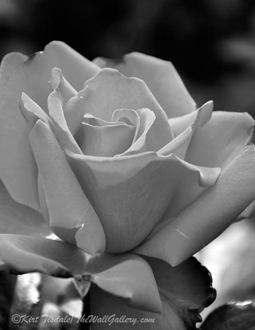 B&W Floral Bloom 5