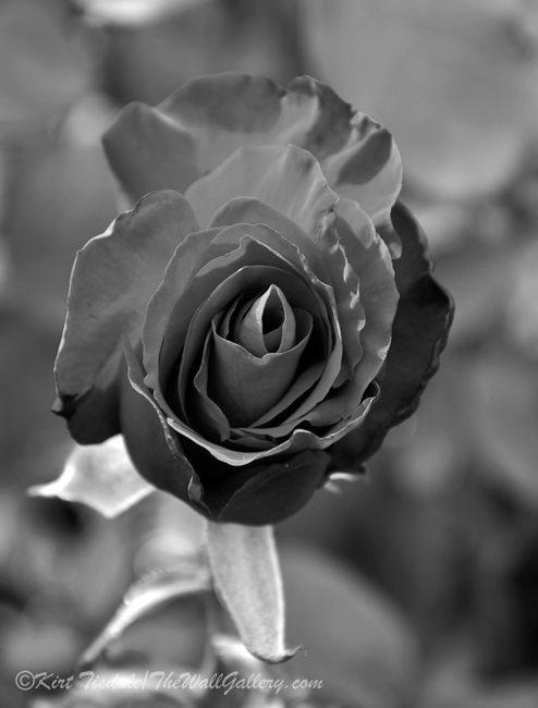 B&W Floral Bloom 6