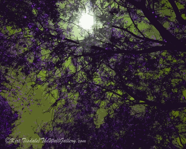 Purple Tree Branches