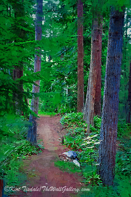 Trail Amongst the Trees