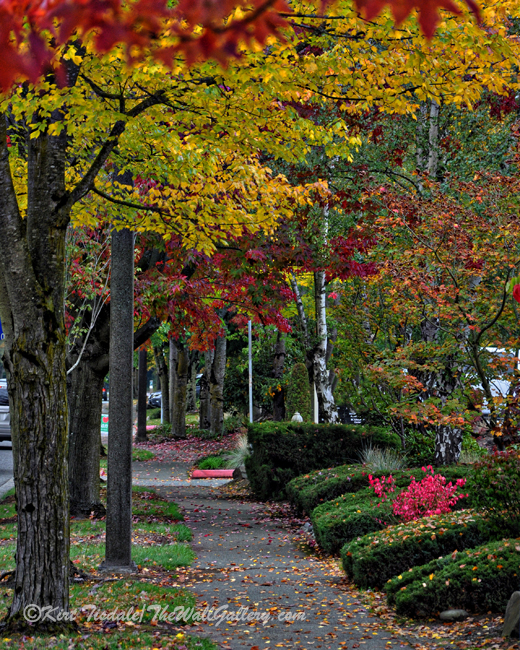 The Sidewalk And Fall
