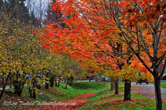 Bright Orange Fall Colors