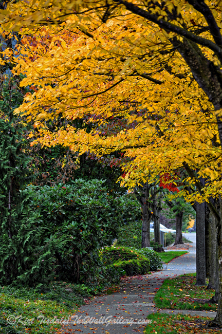 Walkway Under A Canopy Of Yellow