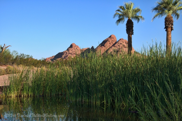 Papago Pond 4