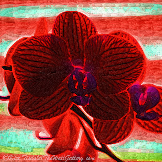 Blood Red Orchid- was created using a fauvism (Fauvism: a style of painting with vivid expressionistic and non-naturalistic use of color that flourished in Paris from 1905) technique of a red orchid bloom. This technique uses abstract shapes and variations of colors to create a unique look.
