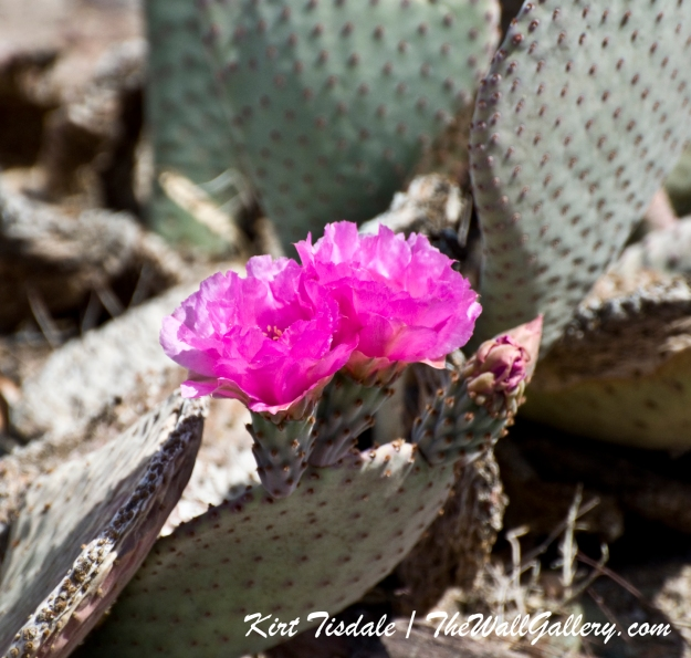 Cactus Bloom 2