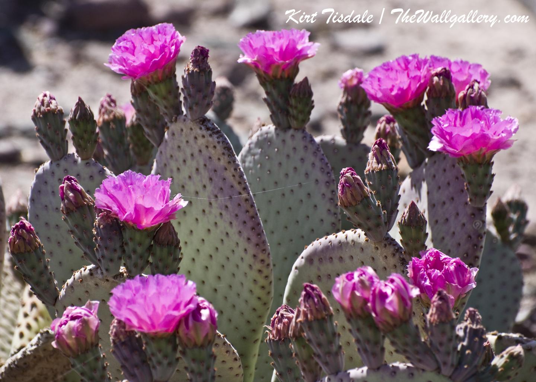 Cactus Bloom 3