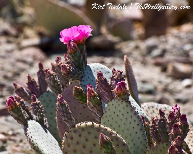 Cactus Bloom 4