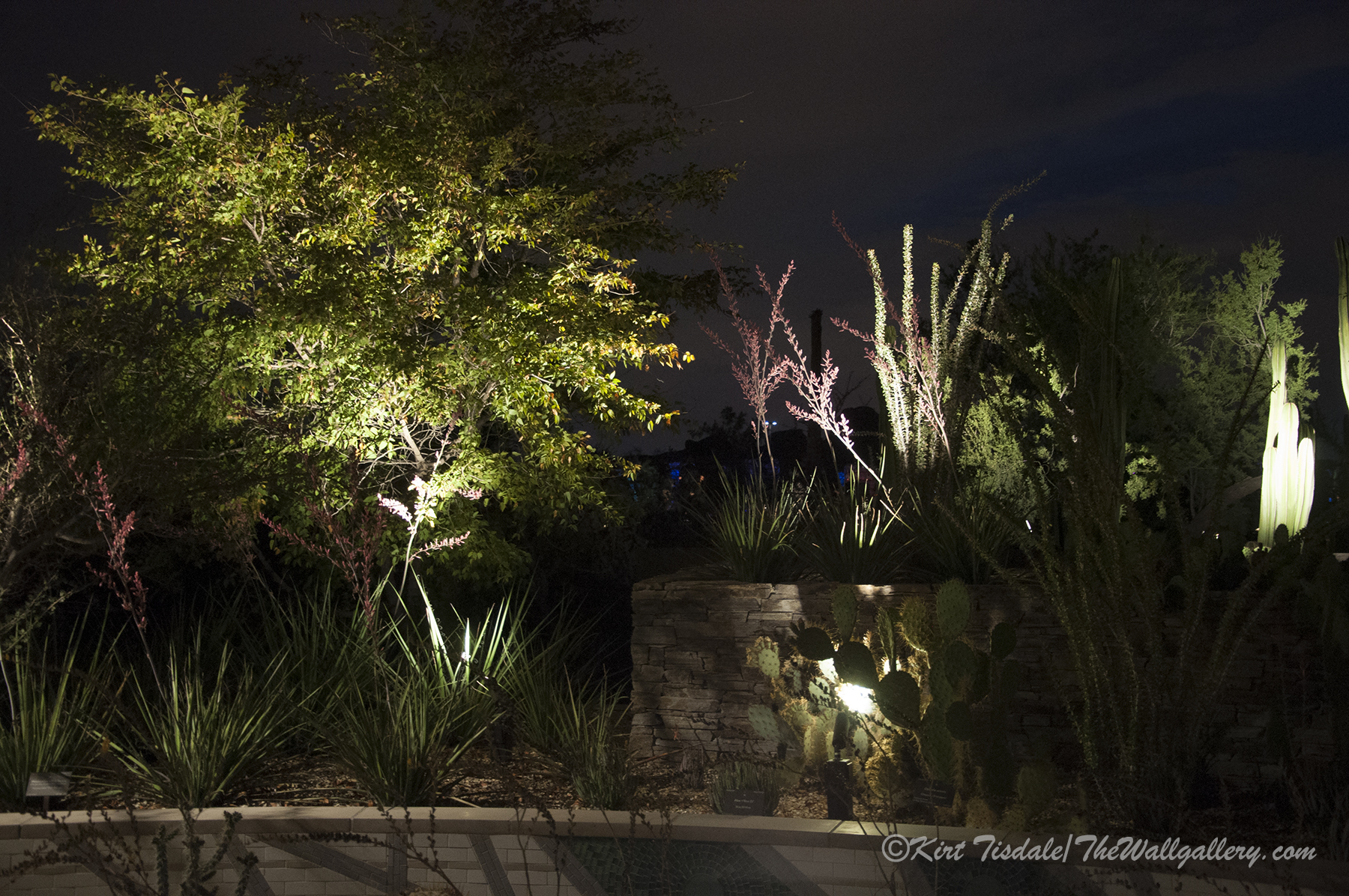 Desert botanical garden at night phoenix thewallgalleryblog for A night at the garden