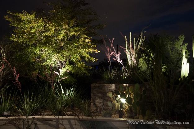 Desert Botanical Garden 2