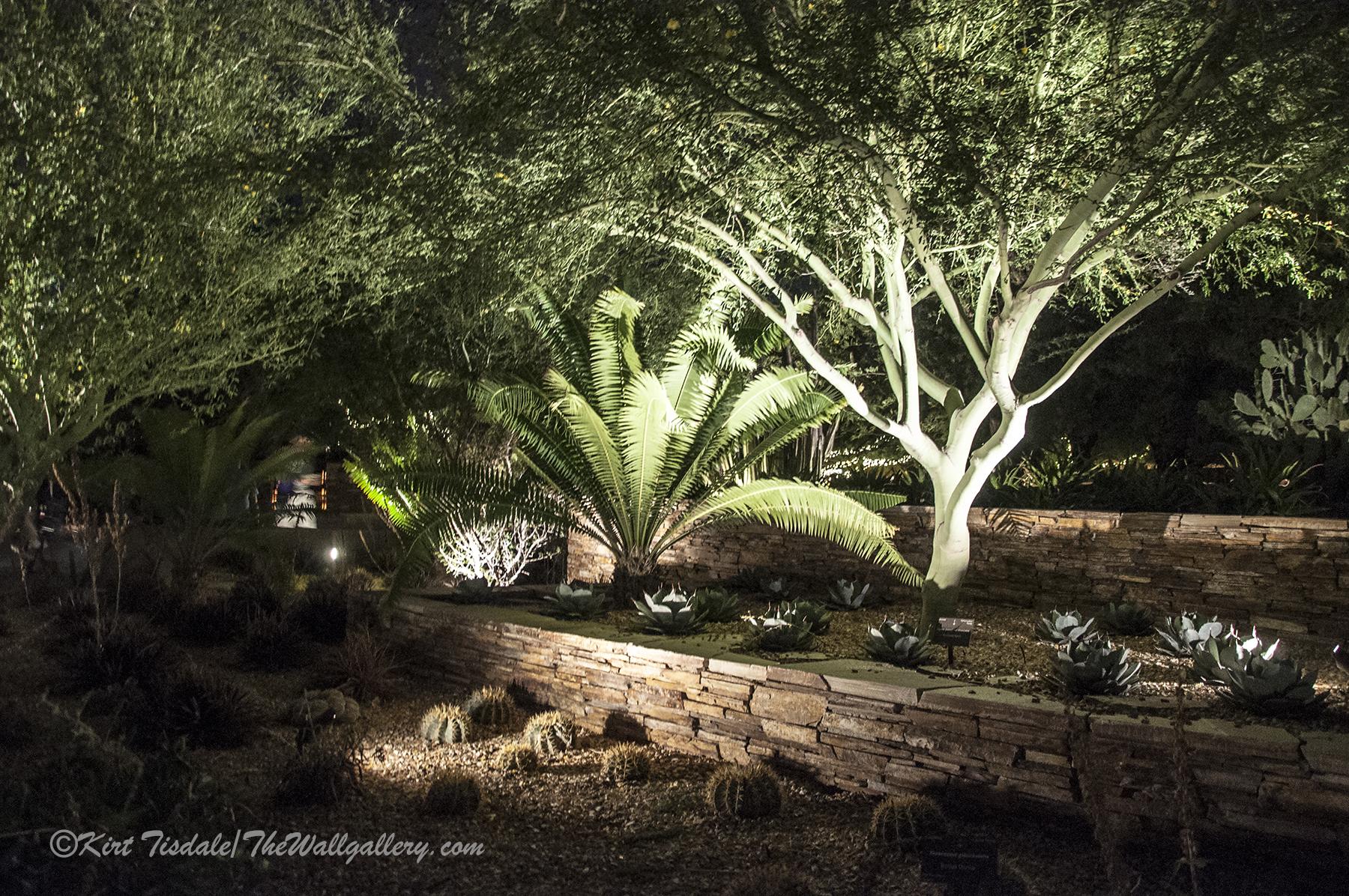 Desert Botanical Garden At Night Phoenix