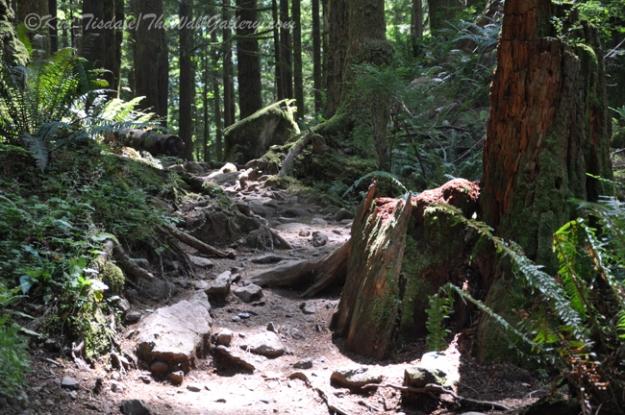 Sunlit Forest Trail