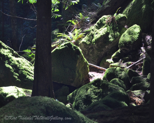 Moss Covered Boulders