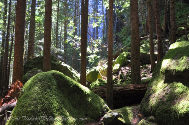 Green Moss Covered Boulders
