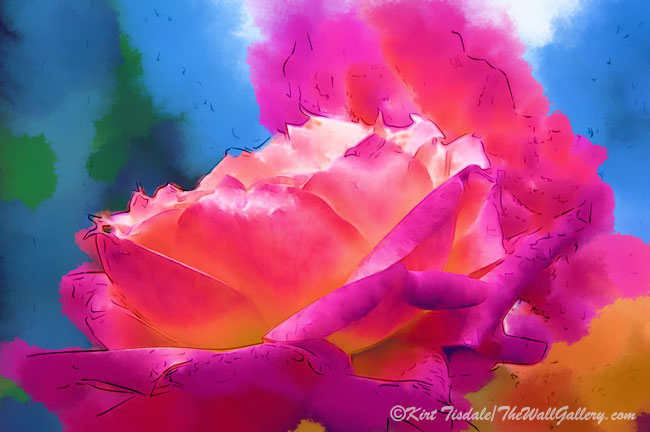 Soft Rose Bloom In Red And Purple